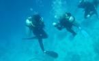 """Les clubs de plongée veulent un motif impérieux pour les """"activités touristiques"""""""