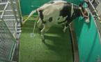 Les vaches envoyées au petit coin pour réduire les gaz à effet de serre