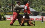 Carbone des Malistaffs - Champion de Polynésie de chien de défense 2013