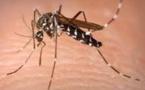 Pas de nouveau cas de chikungunya détecté en Polynésie