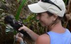 Oiseaux : une conférence ce samedi à Papeete sur les pétrels et les puffins