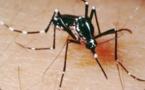 L'épidémie de dengue reste active en Polynésie, le chikungunya scruté de près