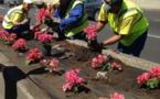 Un arsenal répressif contre les voleurs de fleurs publiques