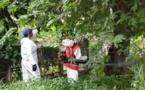 Chikungunya : l'épidémie est lancée en Polynésie, l'arrêter semble impossible