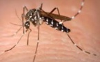 83 cas de chikungunya