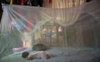 Chikungunya : le nombre de cas confirmés multiplié par 10 en l'espace d'une semaine