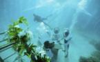 Se marier sous l'eau à Bora Bora : ils l'ont fait !