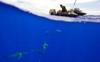 La mission du Pristine Seas à Rapa livre ses premiers résultats