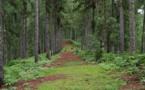 Un enfant de 10 ans meurt lors d'une randonnée à Vaipahi