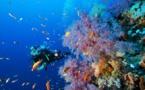 Protection des lagons : La Palme Ifrecor cherche des candidats en Polynésie