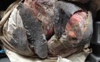 De la viande de tortue et des perles saisies par les douaniers