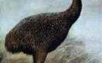 Les premiers Polynésiens ont exterminé les moa
