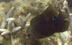 Une association veut déloger le poisson jardinier du PK18