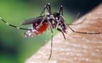 Epidémie de chikungunya en Polynésie : un cinquième décès, 26 748 cas estimés