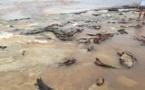 Punaauia : le lagon du PK 18 s'envase