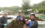 Pa'e Pa'e no te Ora lutte sans relache pour protéger le lagon de Punaauia