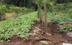 La colère sur le paraquat, un pesticide, cristallise la crise agricole