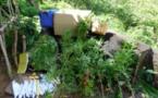 Interpellé avec six kilos de feuilles séchées de paka