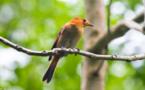 Une agence nationale pour sauver notre biodiversité