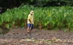 """Mention """"à revoir"""" pour l'enseignement agricole"""