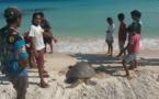 Six tortues polynésiennes sont les stars de centaines d'écoliers dans le monde