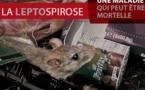 Leptospirose : déjà 60 cas depuis le début de l'année