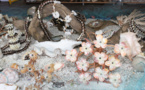 Les coquillages relookés par nos artisans