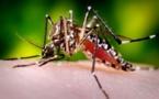 Dengue : 50 % des cas sont des enfants de moins de 16 ans
