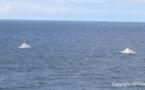 """Secours en mer : """"Les délais d'intervention peuvent être très longs"""""""