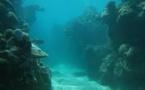 Samoa accueille un atelier sur les mines sous-marines