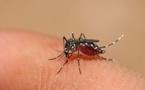 Dengue : la circulation du virus reste  au-dessus du seuil épidémique en Polynésie