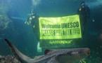 Grande barrière de corail: l'Unesco donne un an à l'Australie pour mieux la protéger