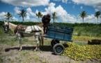 Au Brésil, champion du monde des pesticides, le bio progresse à vue d'œil