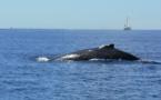 Comment améliorer l'écotourisme dans le Pacifique ?