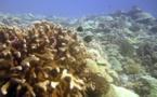 « Si vous cumulez plus de cyclones et de températures chaudes, le corail ne s'en remettra pas »