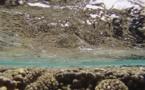 D'où vient le chlordécone de nos récifs ?