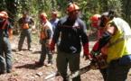 Utilisation de la tronçonneuse et travaux en hauteur : la sécurité avant tout