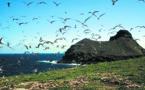 Carnet de voyage aux Marquises: L'omelette des acrobates de Ua Huka