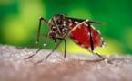 Zika : des conséquences graves sur des bébés infectés in utero