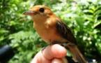 Espèces invasives contre espèces endémiques