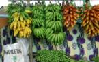 La société agricole Kai Hotu Rau démarre son activité