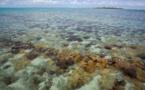 Le Sénat examine enfin la loi pour la biodiversité