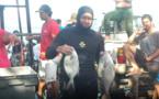 Pêche sous marine : le championnat de Polynésie en individuel samedi 30 et dimanche 31 janvier
