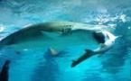 Un requin en mange un autre dans un aquarium de Séoul