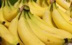 La peau de banane révèle les stades du mélanome cutané