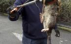 La photo d'un rat géant capturé à Londres fait le tour du web