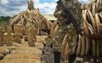 Kenya: pour brûler l'ivoire, le feu ne suffit pas