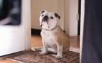 """Cannes: Nellie, la chienne de """"Paterson"""", reçoit la Palm Dog... à titre posthume"""