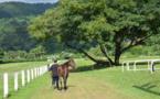 Relancer les courses de chevaux, le grand défi de l'hippodrome