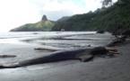 Hiva Oa : huit cétacés périssent échoués sur la plage de Puamau